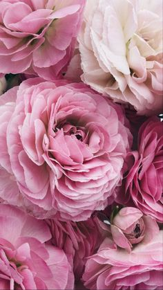 Beautiful Flowers Pictures, Flower Pictures, Pretty Flowers, Pretty Pictures, Colorful Flowers, Floral Wallpaper Iphone, Fall Wallpaper, Aesthetic Iphone Wallpaper, Flower Wallpaper