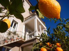 Oranges and lemons at boutique B&B White Lilac Oranges And Lemons, B & B, Lilac, Boutique, Syringa Vulgaris, Boutiques, Lilacs