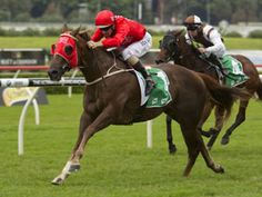 The rising seven-year-old Hot Snitzel became the sixth G1 winner by Snitzel, joining Sweet Idea, Wandjina, Snitzerland, Shamus Award and Sizzling, when he took out the 2015 $500,000 BTC Cup at Doomben on Saturday when having his first start for his new trainers Peter and Paul Snowden.