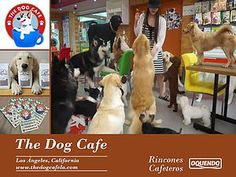 Los Angeles' First Dog Cafe - Play with Rescue Pups! Dog Cafe, Hanging Out, Pup, Adoption, Dogs, Animals, Foster Care Adoption, Animales, Dog Baby