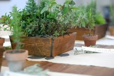 Wooden plant boxes for the table. White ones would be lovely.