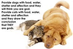 16 Best Pet Quotes We Love images in 2013 | Animal sayings