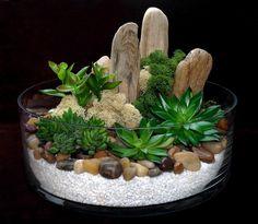 https://www.google.com/search?q=cactus terrarium