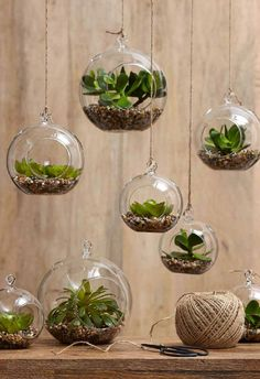 Jade and Echiveria Hanging Spheres. AUD $29.95 These gorgeous glass hanging spheres contain amazingly life-like succulents. They can be hung indoors or outdoors and can be grouped together for an incredible effect.