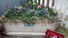 Chevy planter box in full bloom ! Planter Boxes, Planters, Chevy, Outdoor Living, Projects To Try, Bloom, Window Boxes, Flower Boxes, Outdoor Life