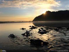 Tutles, Sukamade beach, Meru Betiri National Park, Indonesia.  Photo by Leonardo Halim.