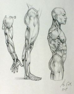 Character Design Collection: Arms Anatomy