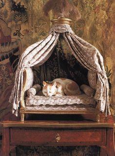 and cat luxury