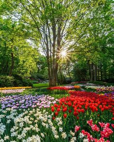 I Am Organic Gardening Info: 6403736774 Most Beautiful Gardens, Beautiful Flowers Garden, Flowers Nature, Bulb Flowers, Large Flowers, Champs, Tulips Garden, Spring Landscape, Different Plants