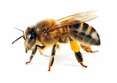 It's safe to say bees are an important part of the ecosystem. Let's keep it that way!