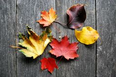 Group of colorful fallen leaves on wooden background Wallpaper Pc, Autumn Leaves, Fallen Leaves, Wooden Background, Wood Planks, Free Pictures, Lovely Things, Facebook, Design