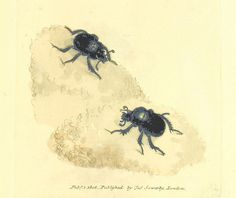Image taken from page 213 of 'The British Miscellany: or, coloured figures of new, rare, or little known animal subjects, etc. vol. I., vol. II' | por The British Library