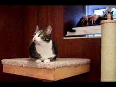 Cat Power Tower, an Amazing Cat Tree reviewed by Ask The Cat Doctor