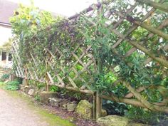 Trellis can enhance any outdoor space but also offer additional privacy and security for your home and garden. Exploring the types and uses for a trellis can help you plan your garden design. At Hartwell & Co we stock an extensive range.  It comes in a wide variety of shapes, styles and sizes, so there are lots of options for you to choose from for your garden.  Our trellis is available in a diamond or square lattice style, with either a straight or shaped tops. Find out more online