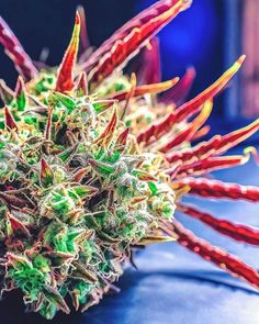 Online cannabis |marijuana|weeds|420|concentrates|edibles|hash|wax|sativa|indica fast,discrete and reliable with amazing blaze buy from us now on our website https://fiberbis.com