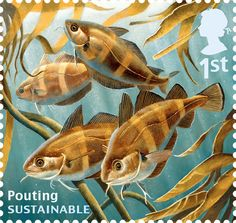 Royal Mail marks World Environment Day. Pouting, Trisopterus luscus, is a member of the cod family and relatively abundant.