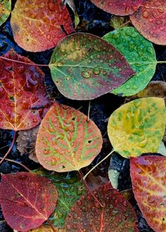 Leaves . . . colour inspiration
