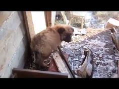 Detroit Dog Rescue - Video - Detroit denies Discover Channel show about the city's stray dog population.