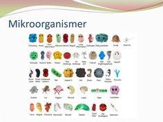 Mikroorganismer.