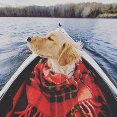 Uma boa mantinha nunca é demais  Follow: @odonocuida . . #dog #dogsofinstagram #dogs #instadog #dogstagram #doglover #ilovemydog #dogoftheday #lovedogs #dogsofinsta #instagramdogs #doglife #doglovers #dogsofig #cutedog #doglove #dogslife #caesdeportugal #caesdosportugueses #puppylove #petstagram #instapets #cutepets #pets #puppydog #cutedogs #portugal
