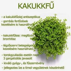 Kuponoldalak Közösségi oldala: Kakkukfű Herbal Remedies, Health Remedies, Natural Remedies, Health And Beauty Tips, Vegan Recipes Easy, Kraut, Natural Healing, Healthy Tips, Herbalism