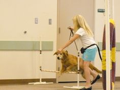 1000 images about girl scout pet on pinterest badges
