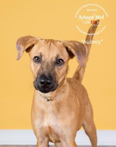 Aubrey is an adoptable Terrier searching for a forever family near Montgomery, AL. Use Petfinder to find adoptable pets in your area.