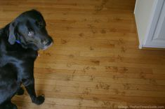 Want hardwood floors? Have dogs? Here's the best hardwood flooring if you have dogs!