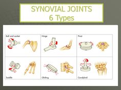 Image result for 6 synovial joints Upper Body, Image