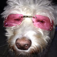Looking at life through rose colored glasses... to the land of peace for all.