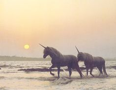 Unicorn date on the beach...in the sundet... Love!