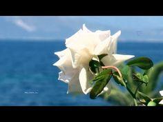 When I Fall In Love  - Giovanni Marradi