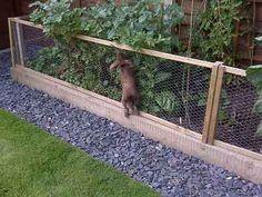 Vegetable Garden Fence Ideas Rabbits Rabbit Proofing The Garden On