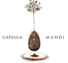 Une capsule pour enterrer les défunts et les faire renaître en arbre.