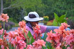 Horticulture at the Dallas Arboretum is the work and love we put into the gardens every day, to give garden guests the best experience and see you smile.