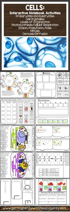 Interactive notebook activities for cells - organelles, prokaryotes and eukaryotes, osmosis, photosynthesis and respiration, mitosis, levels of organization, and more!