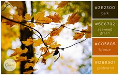 Warm naturals - Color makes a design come alive.