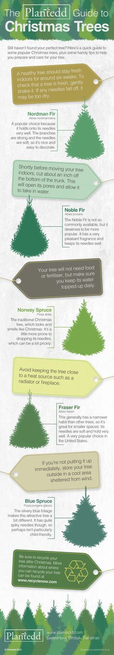 Which Christmas trees hold on to their needles the best and which one smells of Christmas? To find out which variety is the perfect tree for you and g