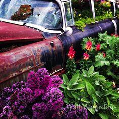 Old Windows Repurposed Outdoors Garden Ideas