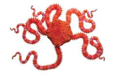 Spineless: Susan Middleton's Mesmerizing Photographs of Marine Invertebrates – Brain Pickings