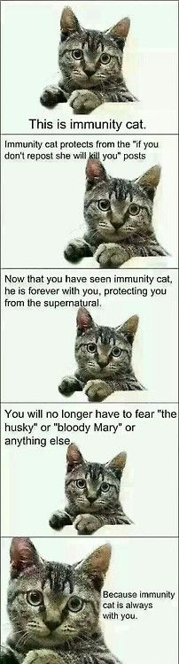 Everybody! Pin this on your most popular board and he will keep you safe! This cat could stop these stupid pins! My cat can help us!!!!!!! <<<I have so many immunity posts XD