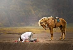 """Whoever Gives Reverence, Receives Reverence."" ~Rumi [sujud ""a young man praying on the border with horse"" nofriza Nasution] Muslim Images, Muslim Pictures, Islamic Pictures, Lb Logo, Ali Islam, Animal Bows, Muslim Pray, Islam Muslim, Flying Tiger Copenhagen"