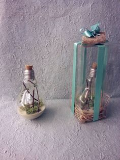 bulb with bulb inside a mini terrarium sand and cacti Mini Terrarium, Cacti, Glass Vase, Projects To Try, Bulb, Etsy, Home Decor, Cactus Plants, Decoration Home