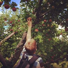 Six Great Apple Orchards and Pumpkin Patches in Northeast Wisconsin [Slideshow]