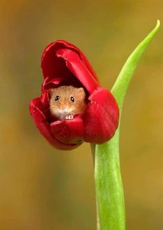 Photographer captures moment harvest mice play among the flo.-Photographer captures moment harvest mice play among the flowers The photographer said it is 'always a pleasure watching these endearing little creatures a… - Cute Creatures, Beautiful Creatures, Animals Beautiful, Woodland Creatures, Cute Little Animals, Cute Funny Animals, Small Animals, Funny Cats, Harvest Mouse