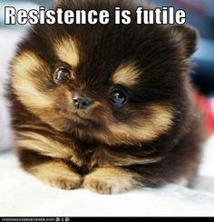 Too Cute Too Resist