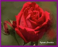 MOT D'AMOUR DU JOUR (pour la femme de ma vie) - Loving Quotation: Amour rose rouge