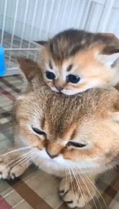 Cute kitty and mom