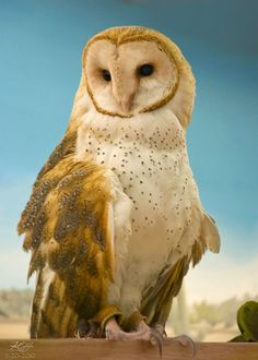 Barn Owl by KGH of SF on 500px