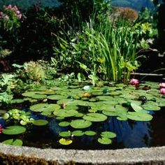 Sustainable, clean watered pond.